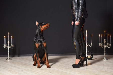 A beautiful young Doberman sits against a black wall and looks at a sexy woman in leather pants and a jacket. Doberman and woman Reklamní fotografie