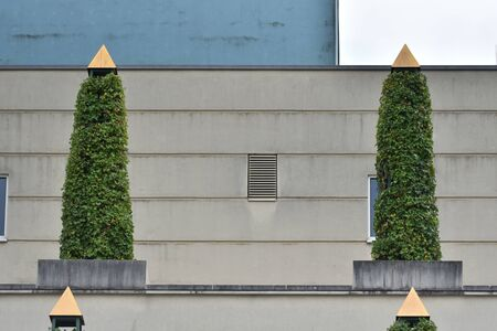 Blowing plant on the roof of a building in a European city.
