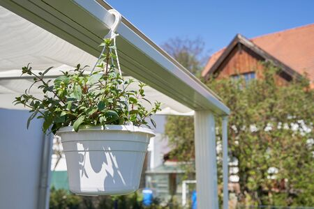 Suspended flower pot in the summer in the home garden