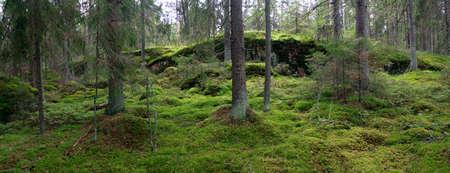 uninhabited: The granite ridges on the uninhabited island of the Finland Gulf Stock Photo