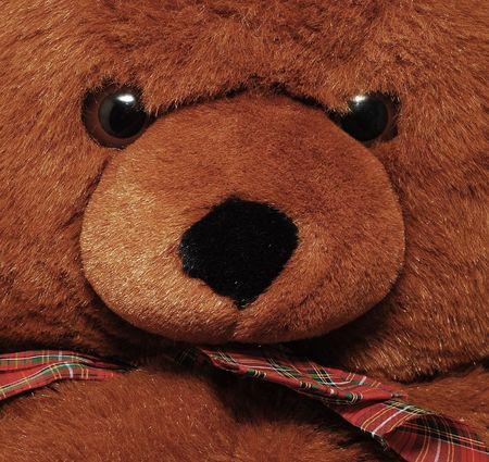 oso negro: detalle oso de peluche