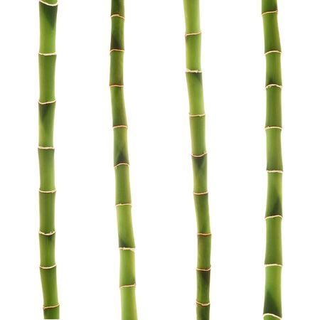 bamboo stick: lucky bamboo stems isolated