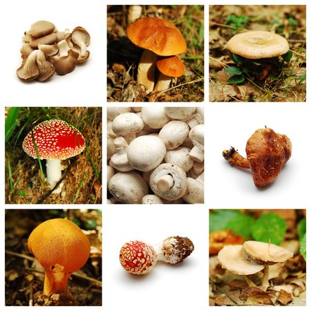 mushrooms collection photo