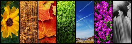 nature montage photo