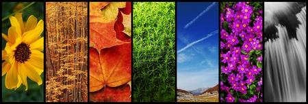 nature montage photo