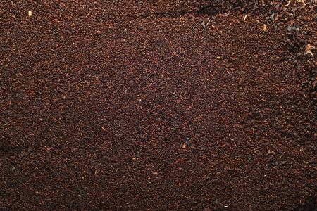 plantas de t� negro Foto de archivo - 8766973