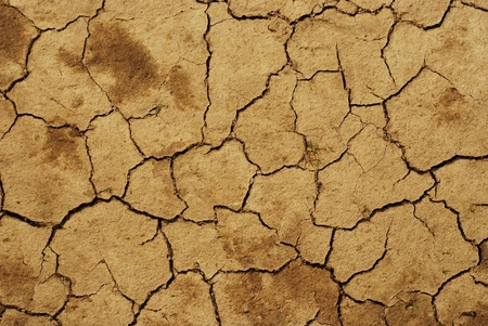 dried soil photo