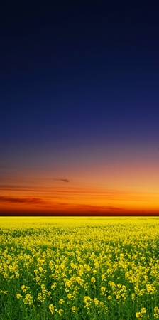field sunset: sunset