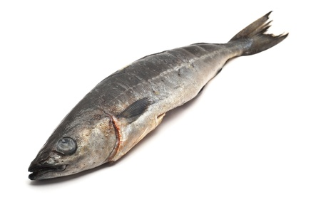 fresh water fish: cod fish Stock Photo
