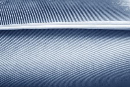 feather closeup photo