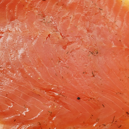 flesh:  salmon fish fillets