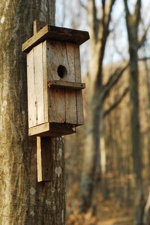 maison oiseau: maison d'oiseau