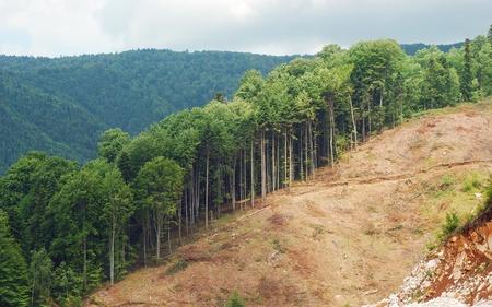 deforestacion: deforestación