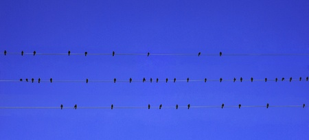 birds on the wire   photo
