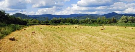 hayroll: landscape panorama
