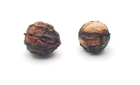 rotten fruit:   rotten walnuts