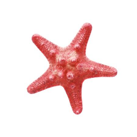 stella marina: stella di mare rosso