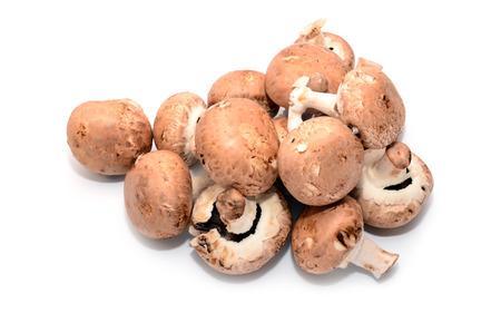 agaricus: agaricus bisporus