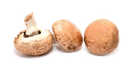 agaricus: Agaricus bisporus edible mushrooms