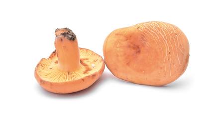 lactarius: lactarius volemus mushroom isolated on white Stock Photo