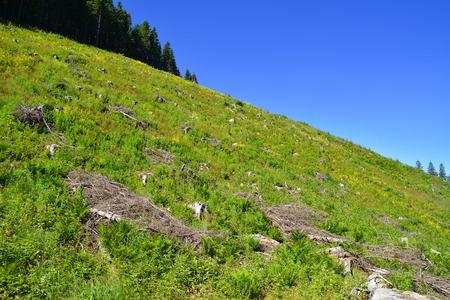deforestacion: �rea de deforestaci�n ilegal en Rumania