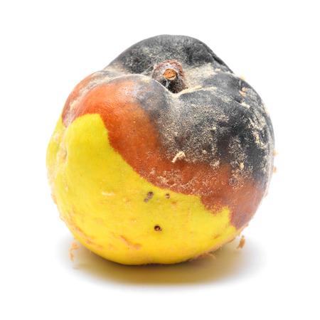 rotten: putrid rotten quince