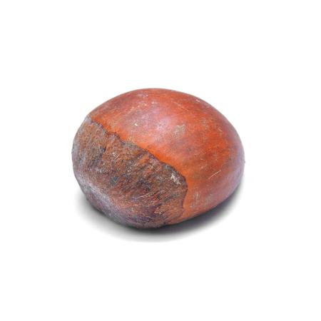 edible plant: edible chestnut