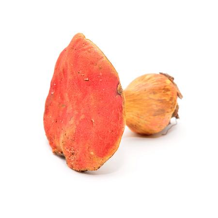 edible plant: xerocomus rubellus mushroom
