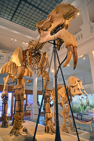 National Museum of Natural History Editorial