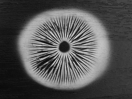 mushroom spore print on black background