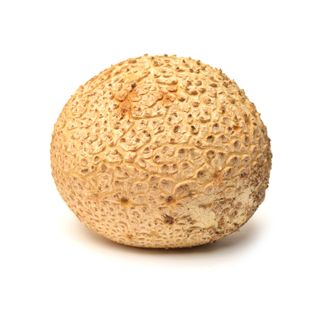 Scleroderma citrinum, commonly known as the common earthball or pigskin poison puffball