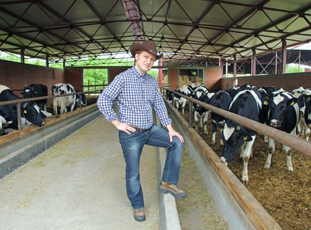 holstein cow: Cowboy and Cows Stock Photo