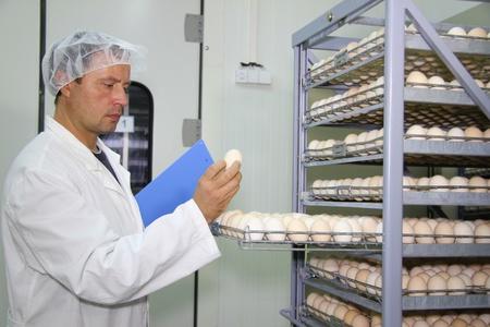 control box: Farmer controls chicken eggs in incubator