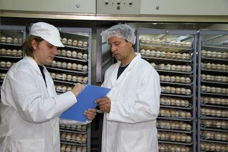 Farmers working in incubator, chicken eggs