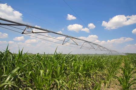 Irrigation of Corn Field photo