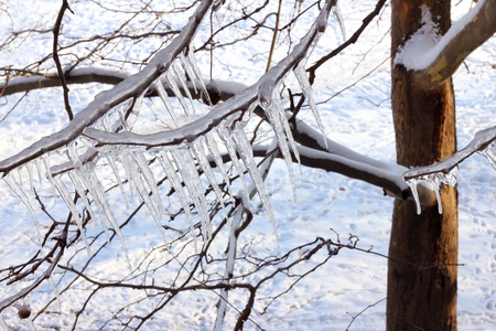 Ice on a frozen tree Stock Photo - 15708361