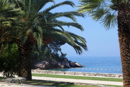 montenegro: Palm Tree at Sea in Montenegro Stock Photo