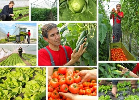 Greenhouse - tomato, cucumber, pepper, lettuce, cabbage