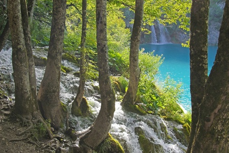 plitvice: Waterfall and stream through the forest, Plitvice - Croatia Stock Photo