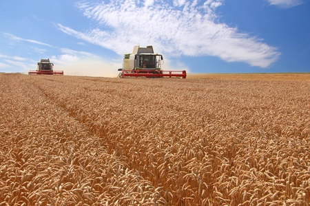 Wheat harvester in action Stock Photo