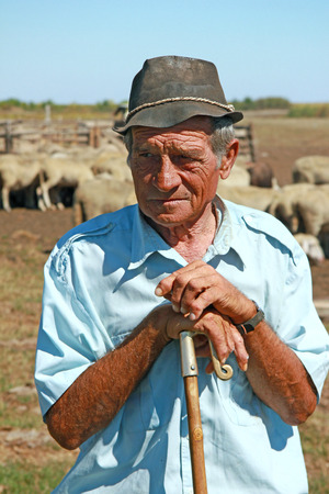 Shepherd with grazing sheep leaning on his stick photo