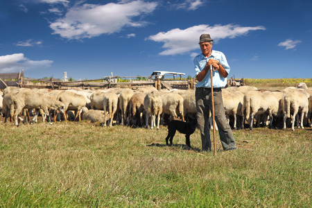 Shepherd with his dog and grazing sheep