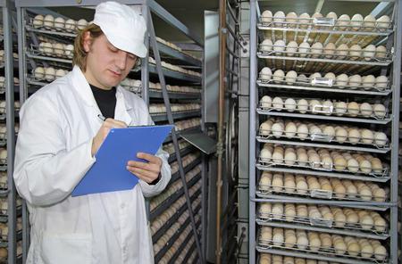 factory farm: Farmer controls chicken eggs in incubator
