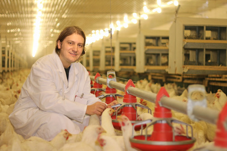 veterinarian: Veterinarian working on chicken farm