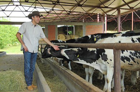 pasturage: Farmer and cows in cowshed