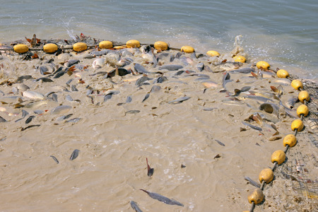 freshwater fish: Freshwater fish in fishing net Stock Photo