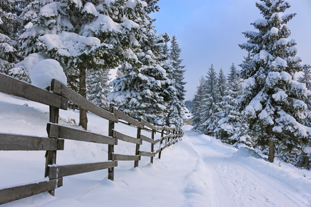 snowed: Mountain road covered by snow at countryside. Winter landscape with snowed trees, and wooden fence