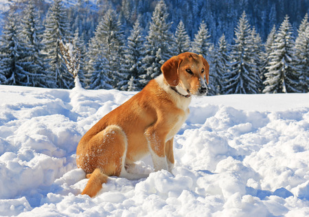 Dog in snow on the mountain