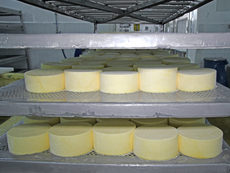 maturation: Cheese production at dairy farm