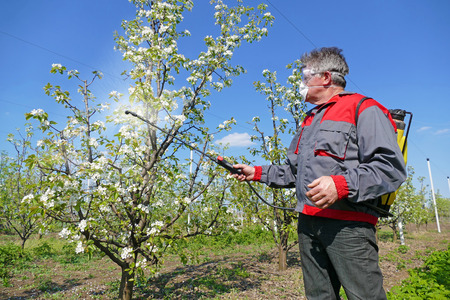 Agricultural worker in a apple orchard spraying pesticide